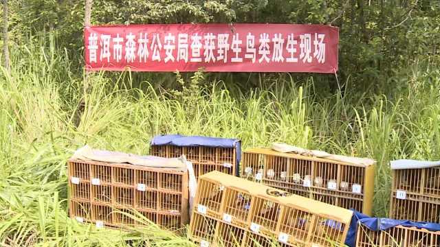 300只野生保护鸟被囚,蜀黍全解救