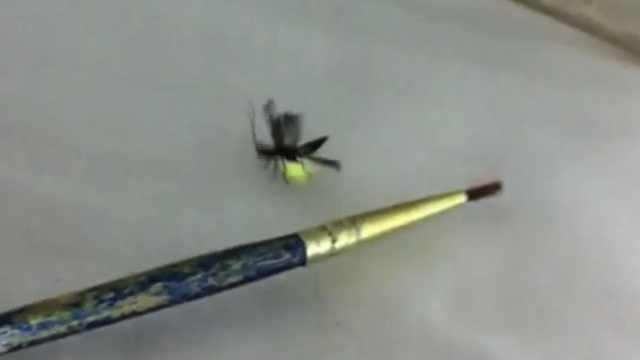 全新科属!在中国发现萤火虫新物种