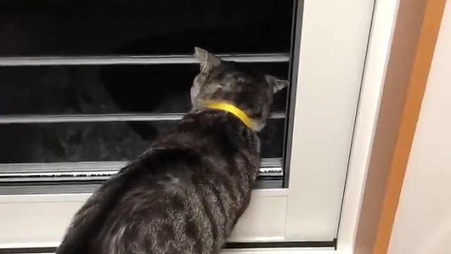 门口跑来一只小猫,被自家猫骂走了