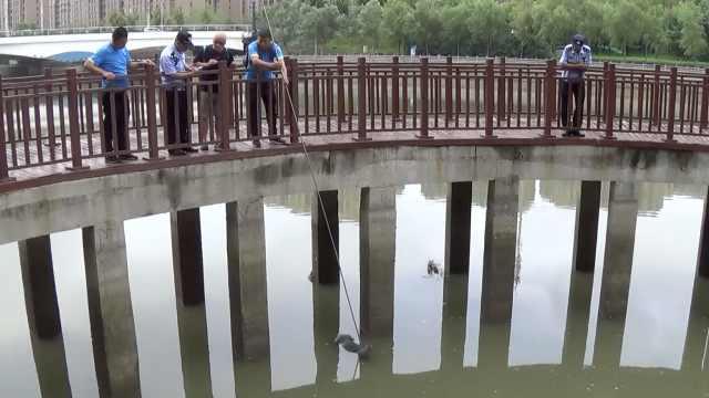 25岁女子遛狗,疑遭狗拖拽坠河溺亡