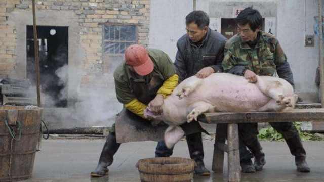 直播:东北杀猪菜,故乡的岁月味蕾