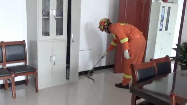 110颤抖求助119:我办公室有一条蛇