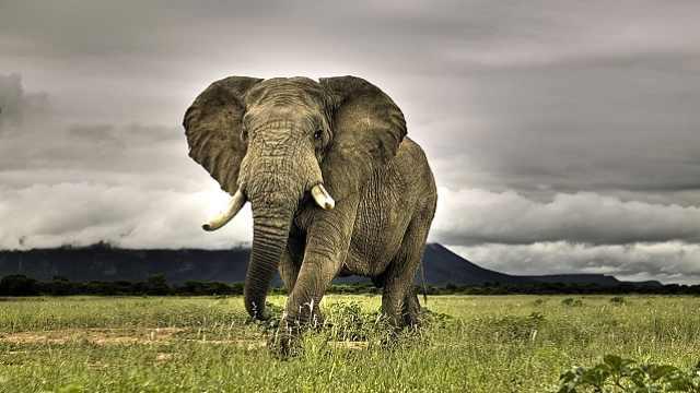 大象为什么朝身上喷泥浆?