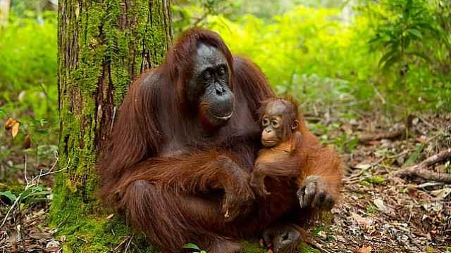惊人!森林动物数量50年来锐减一半