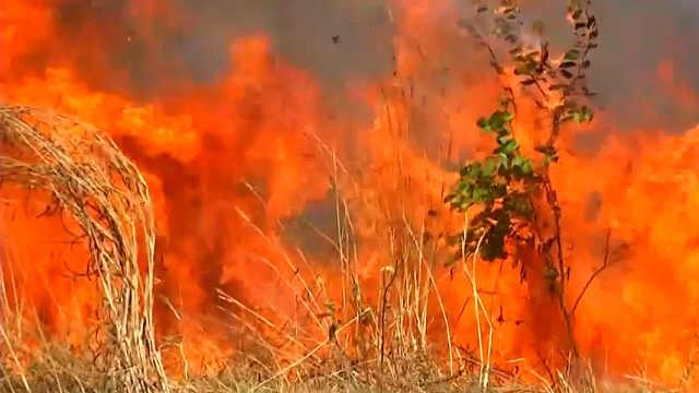 亚马逊森林燃起大火,浓烟太空可见