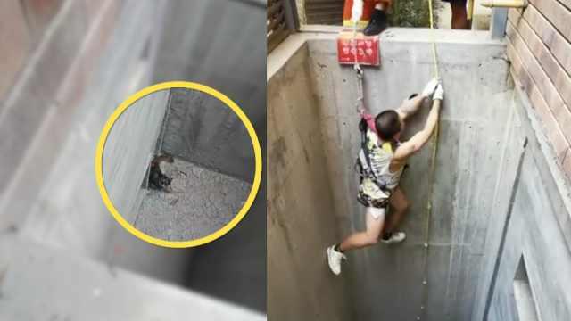 男子5米深井救流浪猫,猫上来人被困