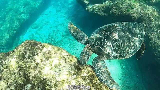 小琉球海底世界,潜水观赏旷世美景