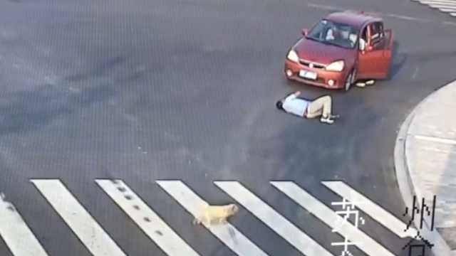 目击行人被撞,小狗观察后过斑马线