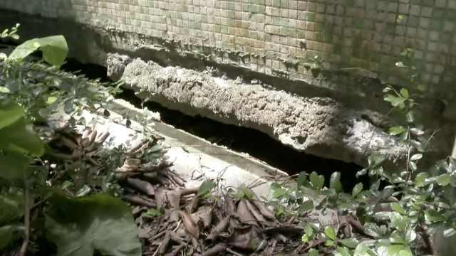 深圳一楼房墙体开裂,物业:尽快修复