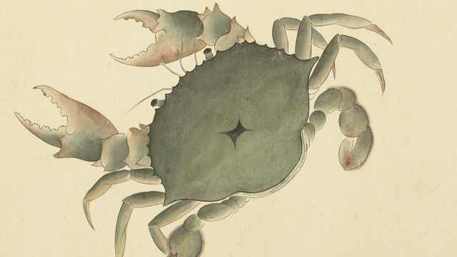 古人怎样吃螃蟹?