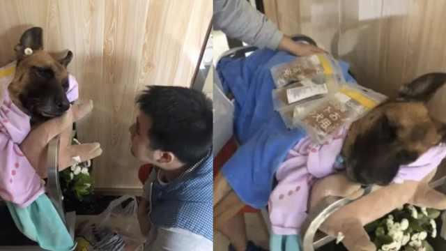 14岁军犬沈虎去世:汶川地震救15人