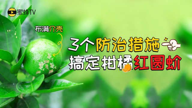 柑橘红圆蚧综合防治方法