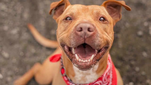 研究称养狗可降低主人24%死亡风险
