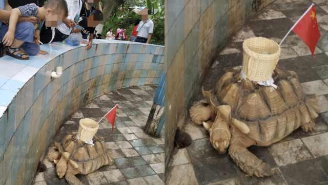 游客投诉陆龟背上粘筐,动物园回应