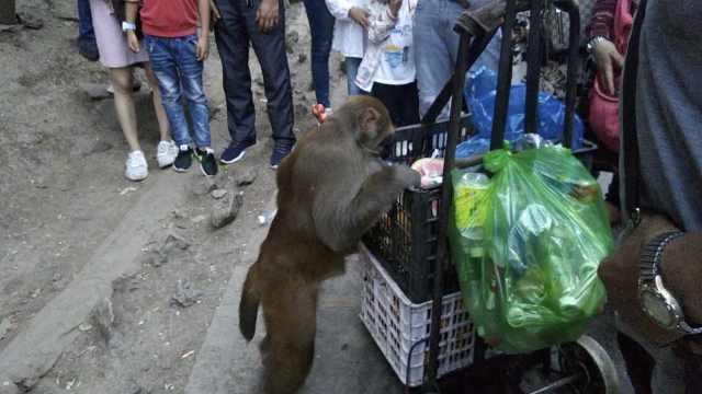 大爷自费喂猴10年,1声呼唤猴群飞奔