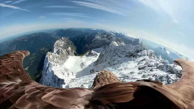 雄鹰飞过阿尔卑斯山,拍下壮美画面