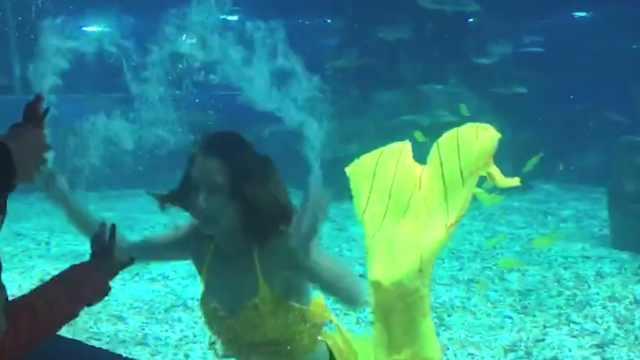 与鲨同行!大学生海洋馆兼职美人鱼