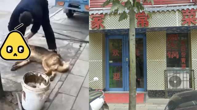 爱狗人士找上门,狗肉馆放弃卖狗肉