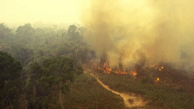 预计亚马逊雨林在2021年达到临界点