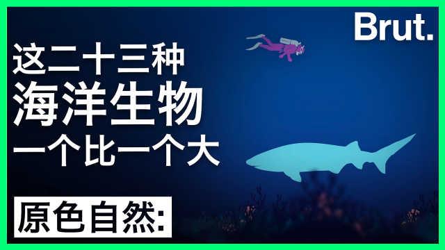 这23种海洋生物,一个比一个大