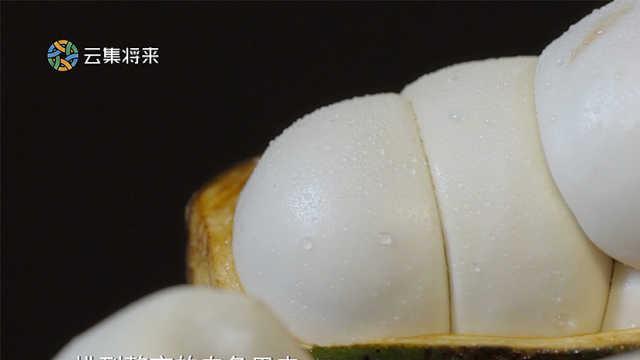 肥宅快乐水的主要原料居然是水果?