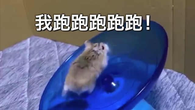 小仓鼠:我是谁?我在哪?