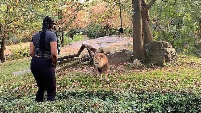 為拍視頻,女游客擅闖獅山將被起訴