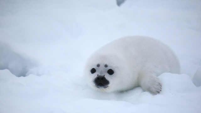 北极海冰消融或致致命病毒暴发