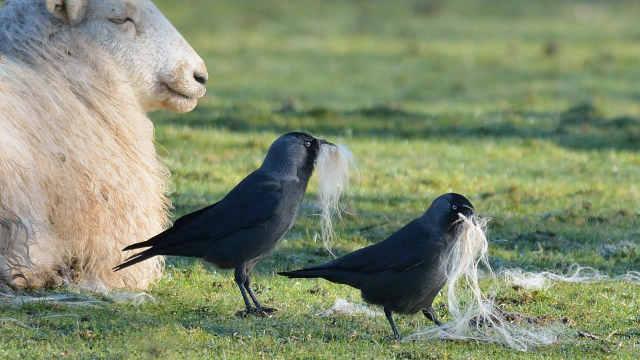 薅羊毛当事群主被曝事发后群里踢人
