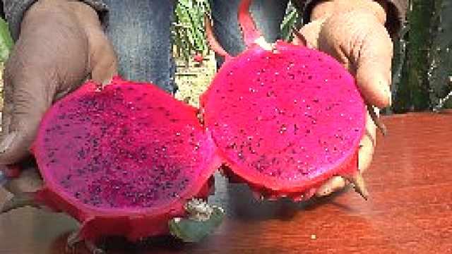 这火龙果甜度爆表,皮薄汁多看得见