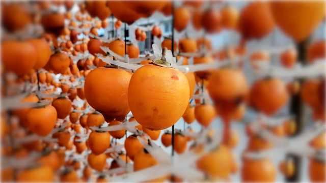 幸福农场晒起五万斤柿饼:个大香甜