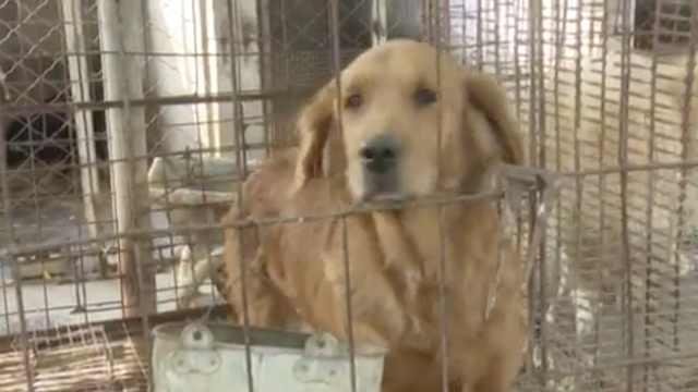 爱狗人士集资救百条狗,一年花13万