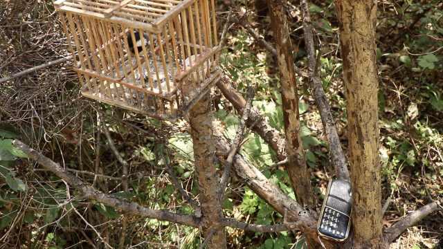 男子结网捕鸟3千只,死亡丢掉的更多