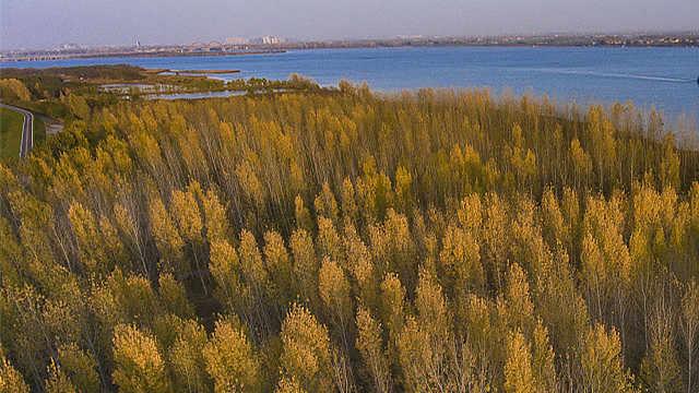 中国何以成为全球绿化的领先者?