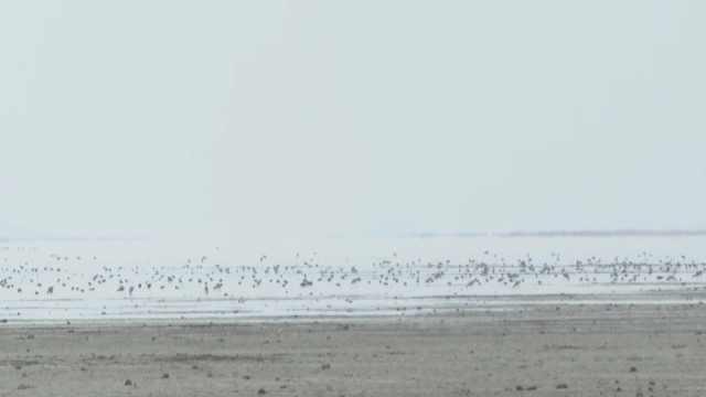 迟到十来天,万只候鸟飞抵鄱阳湖