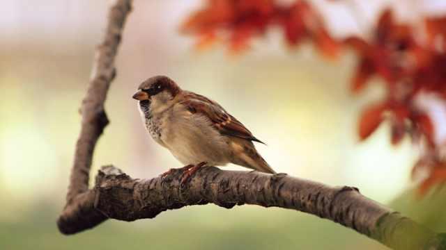 肖辉跃老师讲解不同鸟