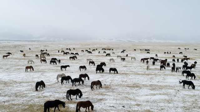 亚洲最大马场白雪覆盖,万马齐奔腾