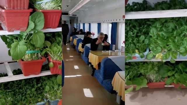 火車上種蔬菜,現摘現炒震驚旅客