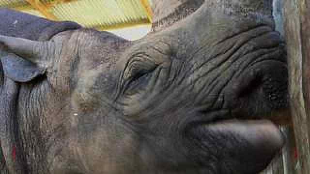 世上最高龄犀牛去世,终年57岁