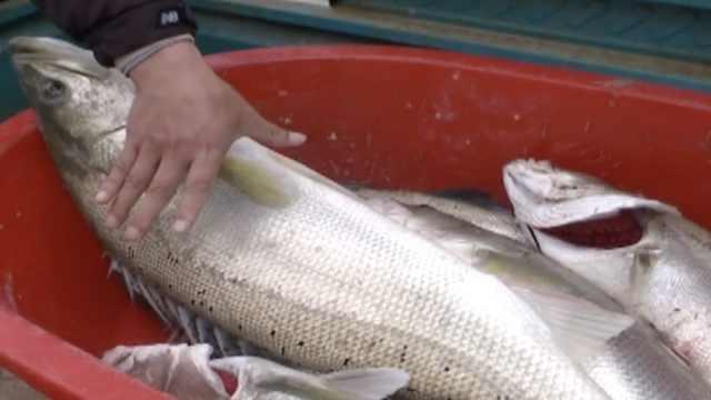 模范高校!校内湖中养鱼给学生加餐