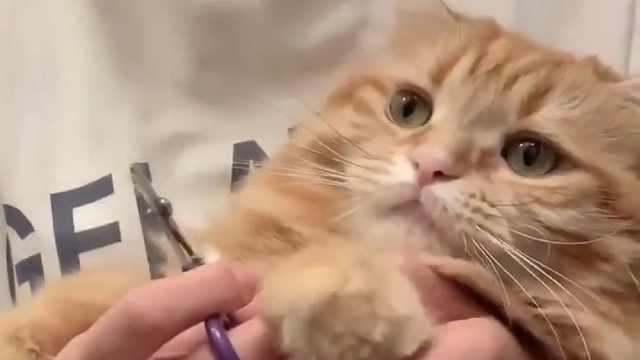 看我这么可爱你舍得下手吗!