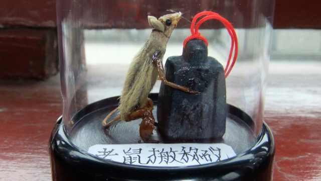 大爷用蝉蜕做鼠年手工,蕴藏歇后语