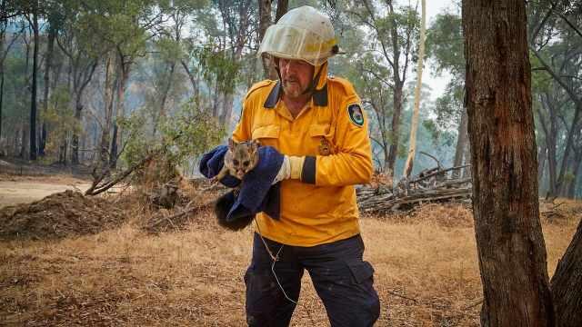 澳洲100种濒危物种栖息地被毁过半