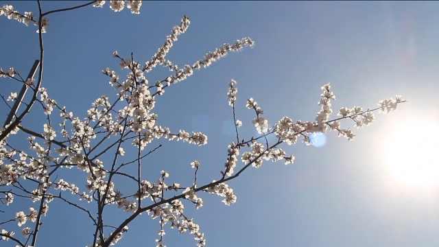 春天的馈赠,不可辜负
