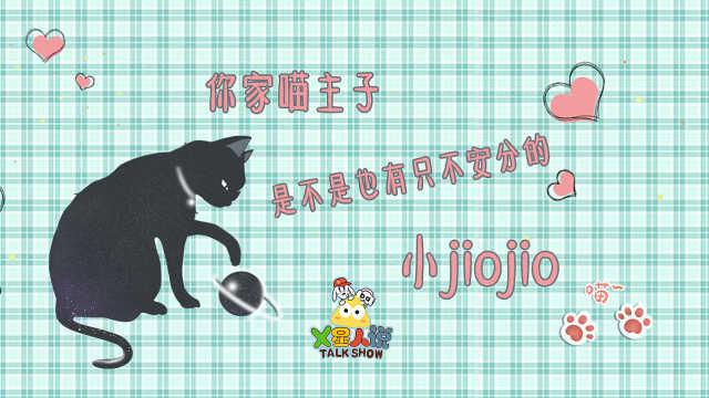 你家喵是否也有只不安分的小jiojio