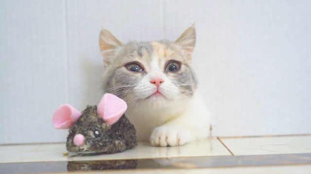 猫咪能不能钻进老鼠洞?