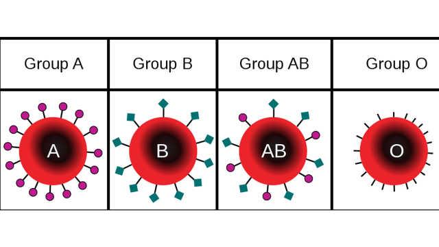 最新研究:首次发现A型血人群更易感新冠肺炎,O型血风险低