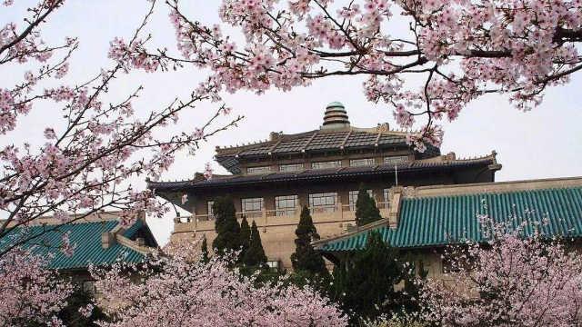 直播:武汉大学樱花盛放,让我们一起迎接春天