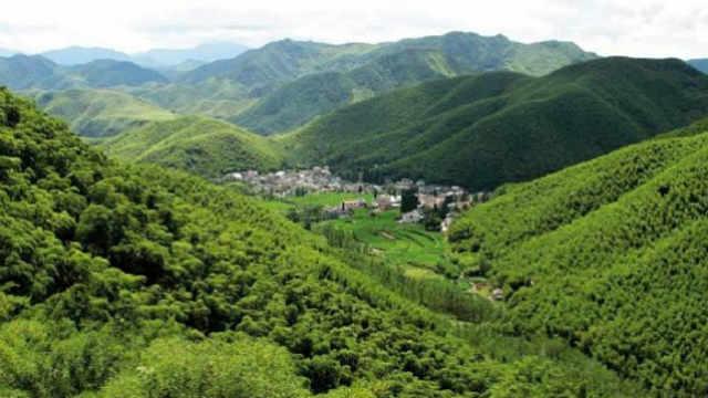 造林706.7万公顷! AI数读2019年国土绿化成绩单