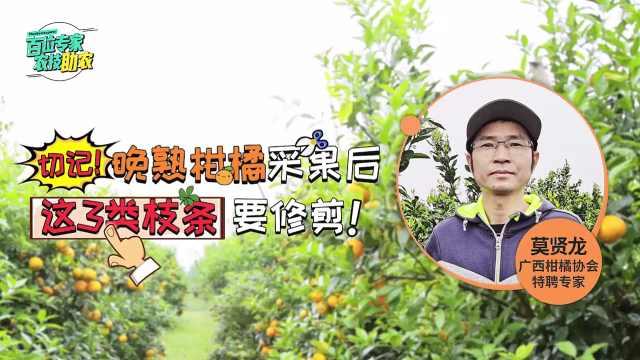 晚熟柑橘采果后,春季这3类枝条要记得修剪有助于丰产!